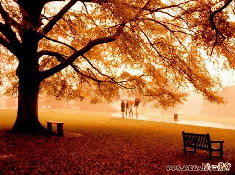爵士单簧管秋叶谱子