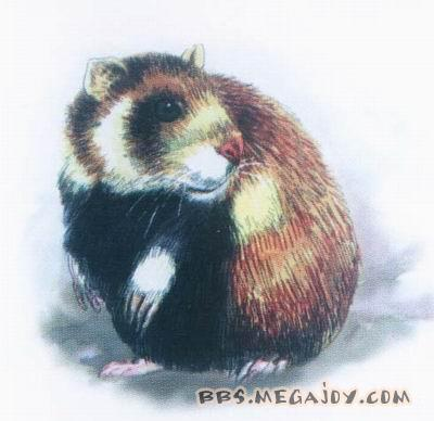 [2006-1-5]地球上己灭绝的珍惜动物