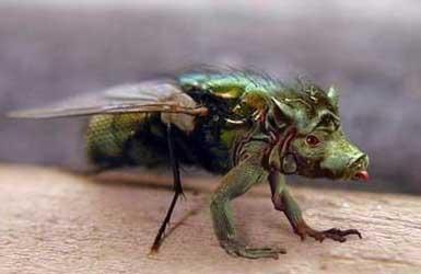 [动物世界] [2006-3-3]在亚马逊丛林深处发现的无名