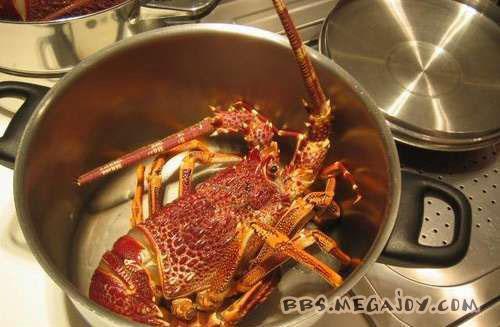澳洲大龙虾的做法(详细过程图)