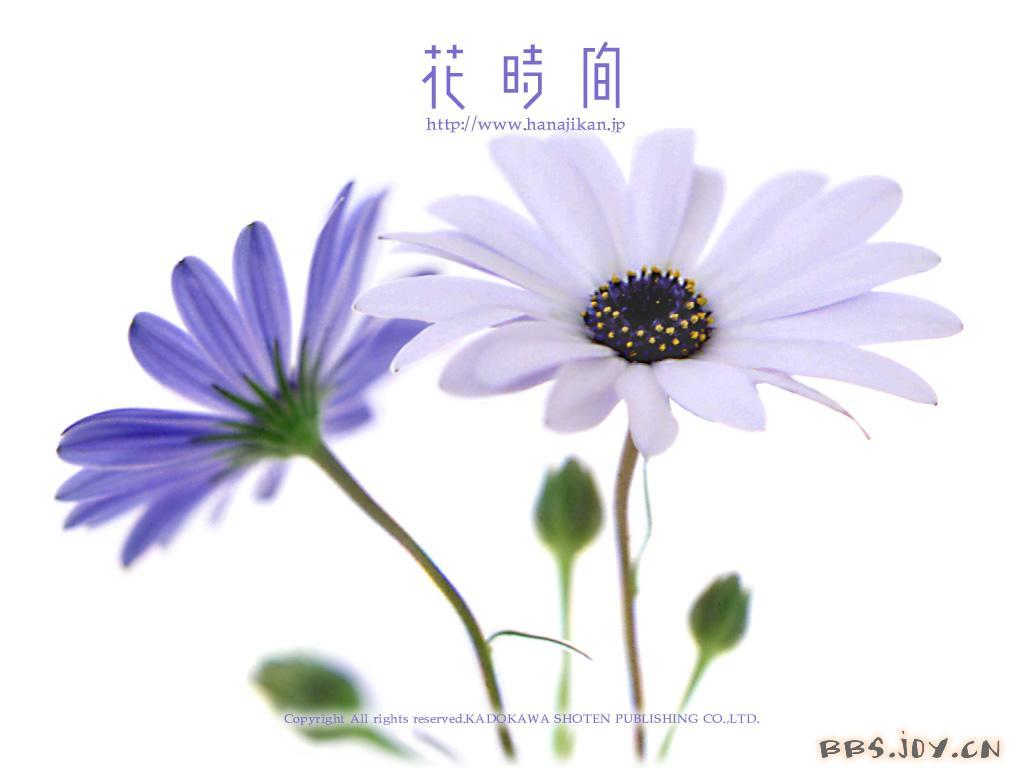昭君出塞:这是阿炳父亲华雪梅亲传的琵琶曲,与《昭君怨》及《塞图片