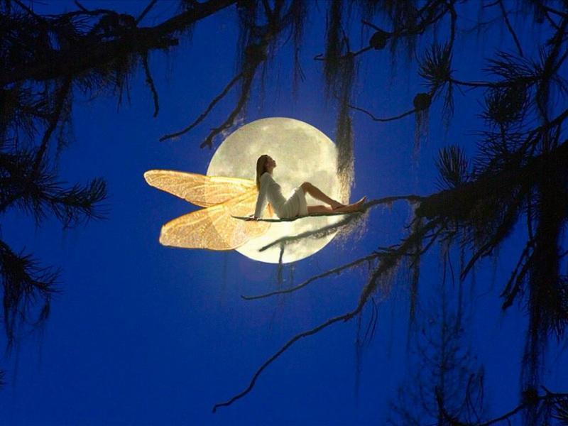 《在银色的月光下》